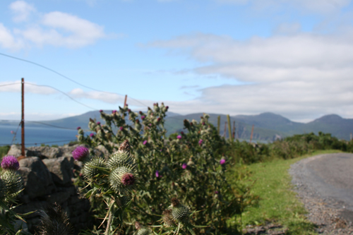 Jura, its road and the thistle - Scotland's symbol